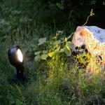 Projecteurs LED jardins et fontaines